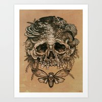 Skull With Cicada Art Print