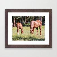 Horses Feeding In A Fiel… Framed Art Print