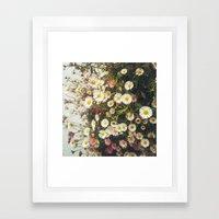 Wall of Daisies Framed Art Print