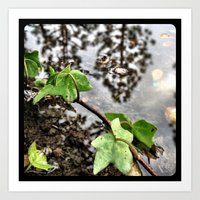 Water, leaves, and the reflection of trees. Art Print