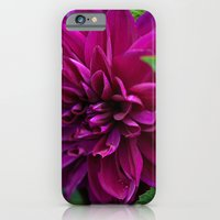 iPhone & iPod Case featuring dahlia by Photofairy