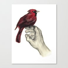Cardinal Focus Canvas Print