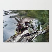 long neck Tutle Canvas Print