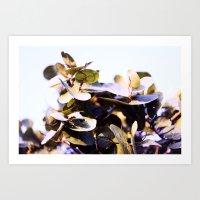 Sea Grape - Grape Infusion  Art Print