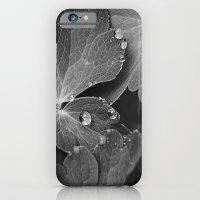 Black & White Spring  iPhone 6 Slim Case