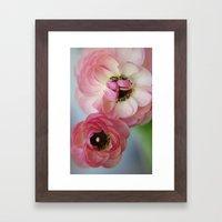 Pink Ranunculus Flower Framed Art Print