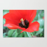 There's Nothing Like A S… Canvas Print