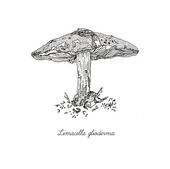 Limacella Glioderma // Hand Drawn Fungi Series Art Print