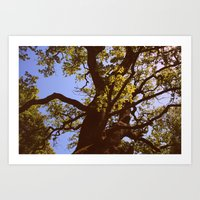 Old oak 122 Art Print