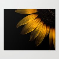 Backyard Flowers 28 Sunf… Canvas Print