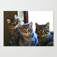 What Are You Looking At? x 3 Canvas Print