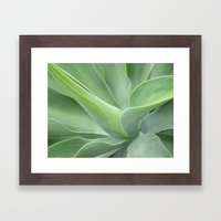 Green Agave Attenuata Framed Art Print