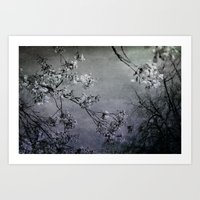 clouds of blossoms 1 Art Print