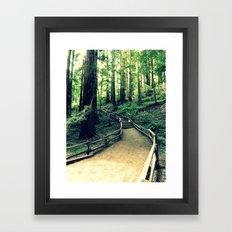 Muir Woods Path Framed Art Print