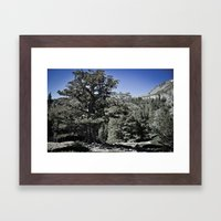 Search for Nature Framed Art Print