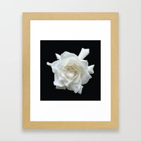 Gardenia on Black DPG150524  Framed Art Print