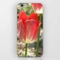 Transparent Tulip iPhone & iPod Skin