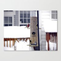 Bird in the snow Canvas Print