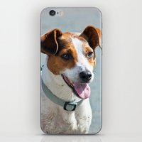 Jack Russell iPhone & iPod Skin