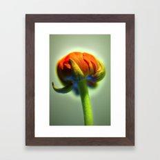 Orange Bud Framed Art Print