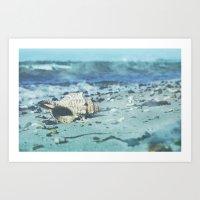Shell On The Beach Art Print