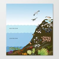 Southern California Tide Pool Explorer's Guide Canvas Print