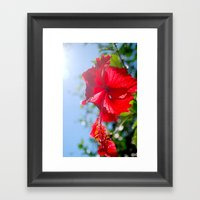hibiscus in Thailand Framed Art Print