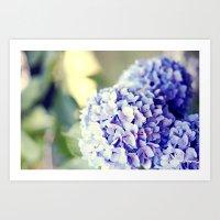 Purple Hydrangeas Art Print