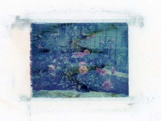 Double Exposed Nature Art Print