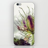 Love in a Mist Pod iPhone & iPod Skin