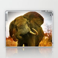 Mad Elephant Laptop & iPad Skin