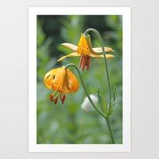 Wild Tiger Lily  Art Print