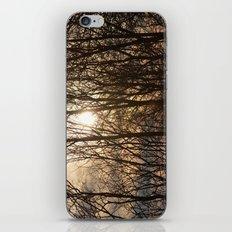 Iowa Winter Sun iPhone & iPod Skin