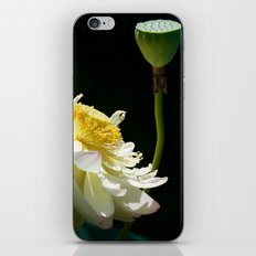 Stages of Lotus iPhone & iPod Skin