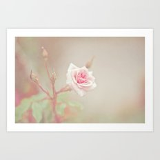 Little Pink Rose Art Print