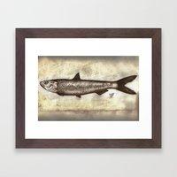 Sardine Framed Art Print