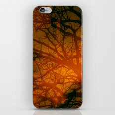 Trees In The Golden fog sunset iPhone & iPod Skin