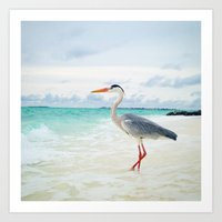 Love2Snap Instagram pic Bird Maldives Art Print