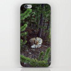 Sleeping Fox iPhone & iPod Skin