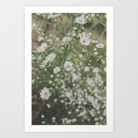 wildflowers. Art Print