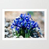 Iris Watercolor Art Print