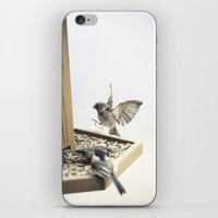 Tom Feiler Sparrows iPhone & iPod Skin