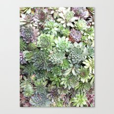 Desert Flower I Canvas Print