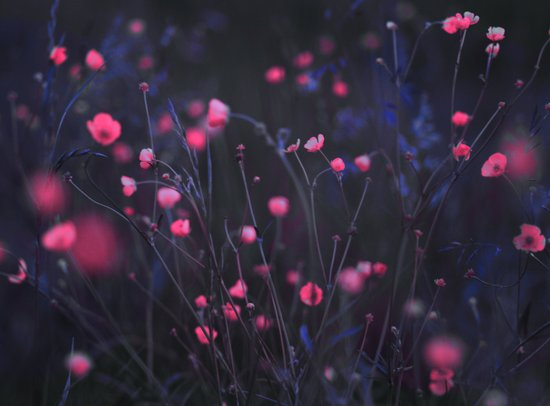 Purple dusk. Art Print