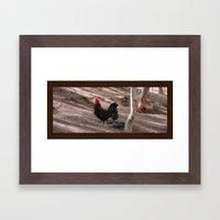 Cockerel Framed Art Print