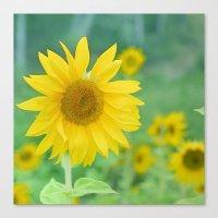 Sunflowers. Vintage spring  Canvas Print