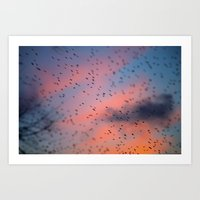 Starlings II Art Print