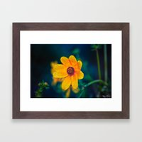 5 AM Flower.... Framed Art Print