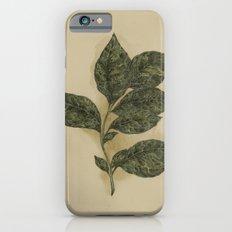 Basil Slim Case iPhone 6s