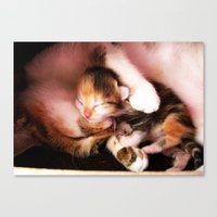 Cats Hug Canvas Print